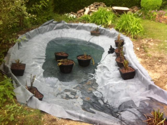 Carpes koi et poissons de bassin ext rieur for Bache poisson